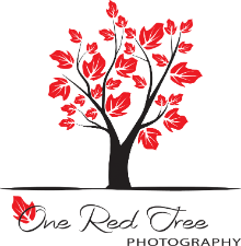One Red Tree Photography